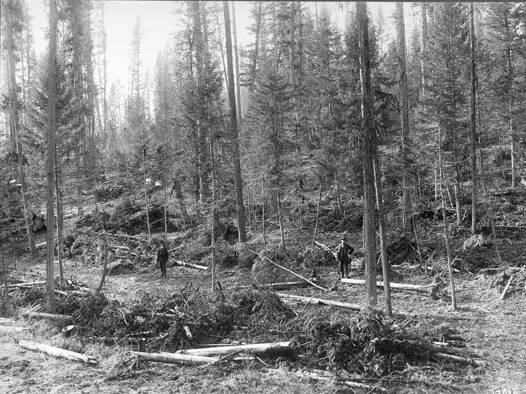 Employees survey timber and slash for the Big Blackfoot Milling Company near Seeley Lake, Montana, c. 1908.